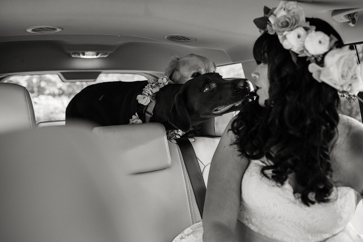 blacksburg virginia wedding bride dogs kiss