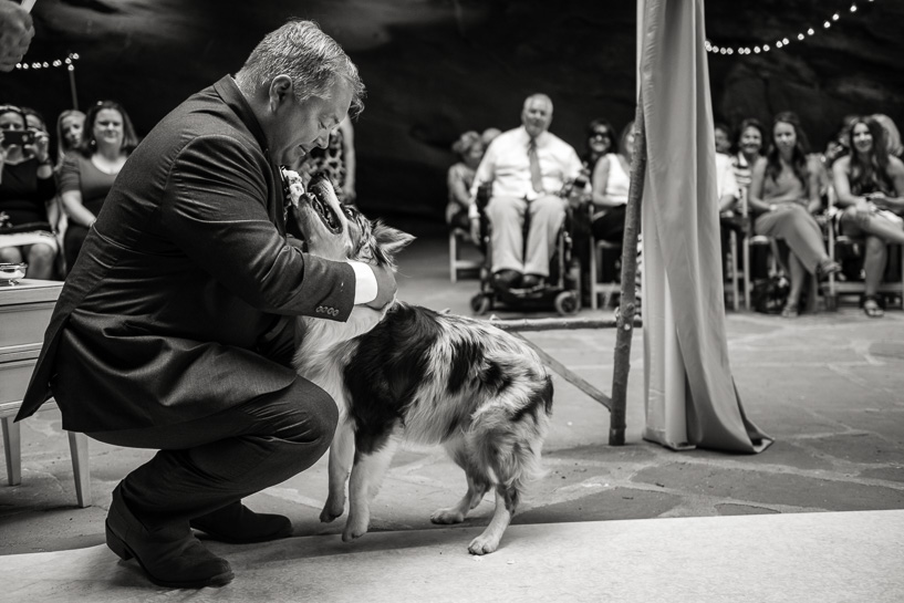 Dogs at weddings by Denver wedding photojournalist